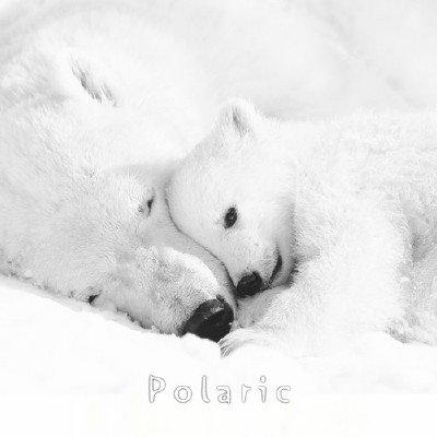 R. Nikolaenko - Polaric (2014)